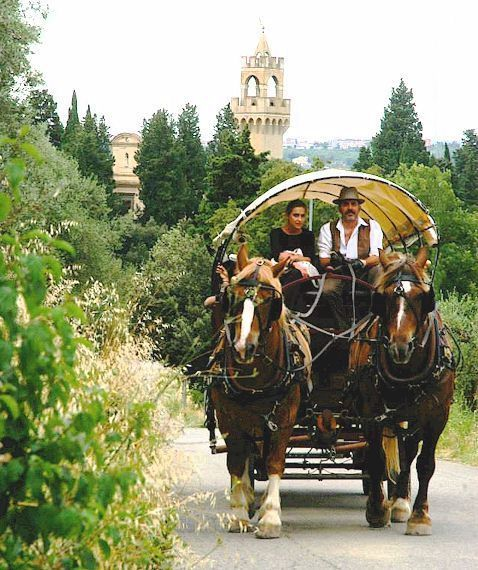 horse and wagon ride in Chianti
