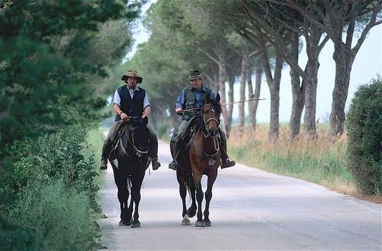 Butteri, the cowboys of the coastal Maremma plains of Tuscany
