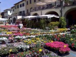 Greve in Chianti transformed for the annual Festa dei Fiori
