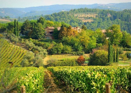 Tuscany Wine Guide